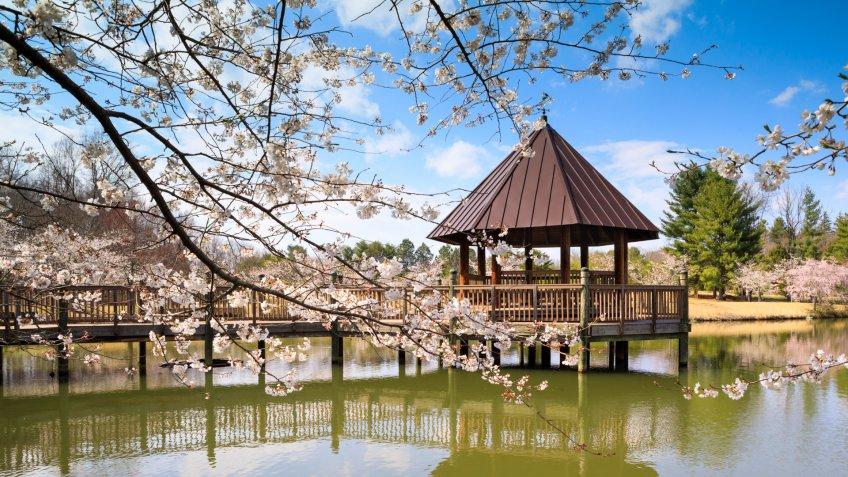 Boardwalk and gazebo at Meadowlark Regional Park in Vienna, Virginia when cherry trees are in spring bloom.