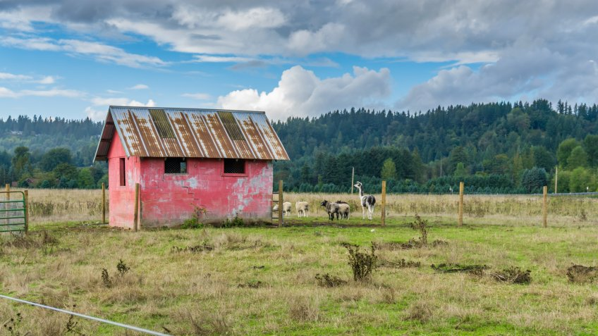 A view of a red shed and farm animals in Auburn, Washington.