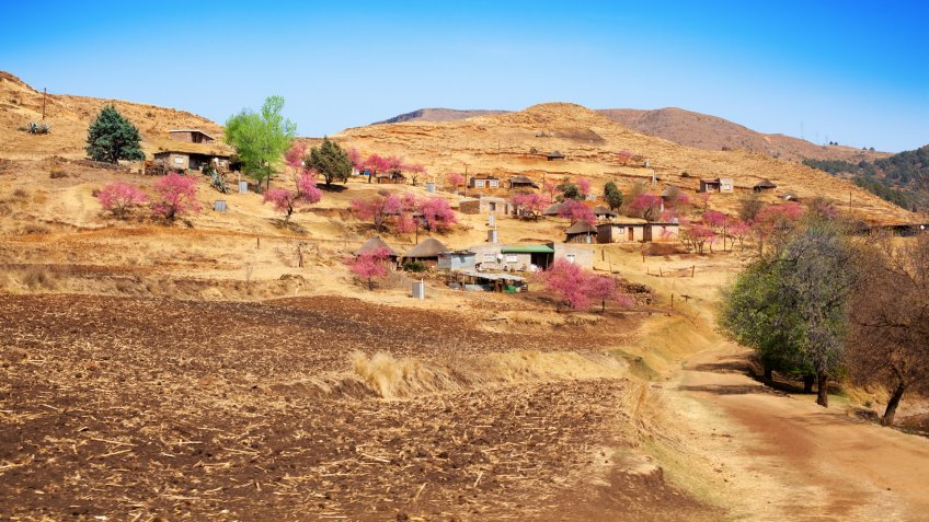 Beautiful highland landscape Drakensberg mountains, blossom peach trees, pink flowers, village on yellow slope on sunny day, bright blue sky background, scenery spring time in Lesotho, Southern Africa.