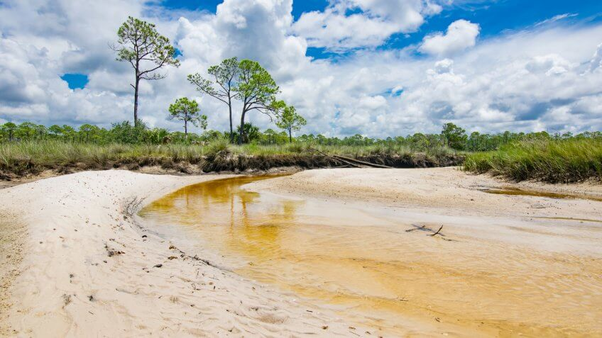 A clear creek with a sandy bottom winds through a tidal wetland in northern Florida.