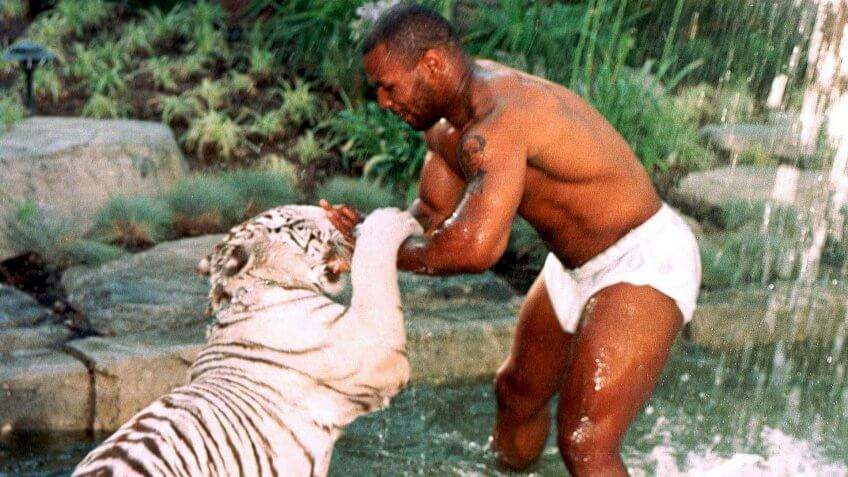 MIKE TYSON PLAYING WITH PET TIGERMIKE TYSON PLAYING WITH PET TIGER, LOS ANGELES, AMERICA - 1996.