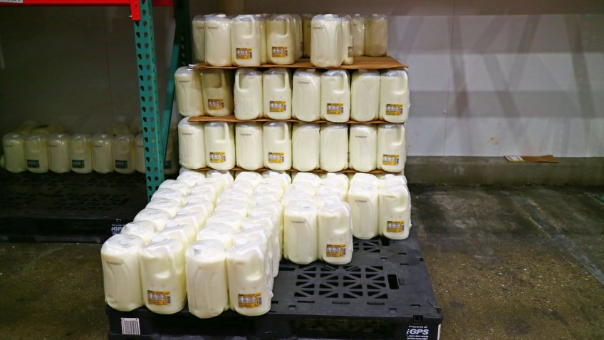 San Leandro, CA/USA - October 8, 2019: Milk stacked together at Costco Wholesale.