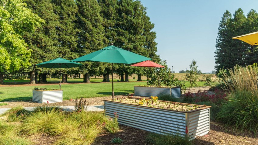 Rohnert Park, California/ United States - 2018-09-03 : Raised Planter Beds for a Farm to Table Restaurant.