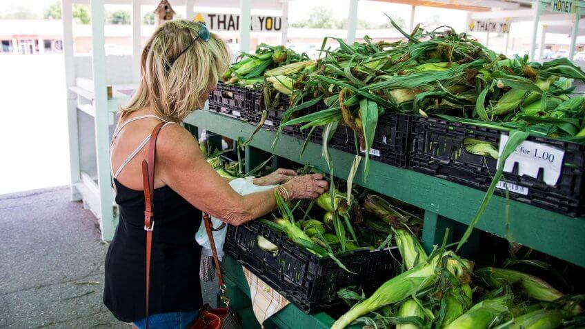 Fresh Nebraska corn just picked at a farmers market being inspected by a women July 14th 2018 in Omaha Nebraska USA.