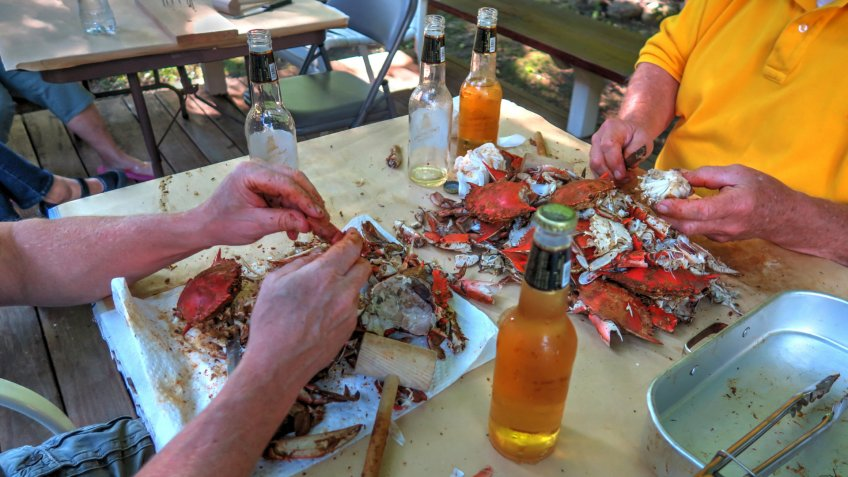 Backyard crab feast eating steamed blue crab from Baltimore, Maryland in the summer.