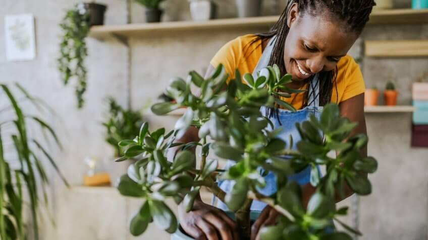 Florist Woman Seedling Plants in Her Flower Shop.