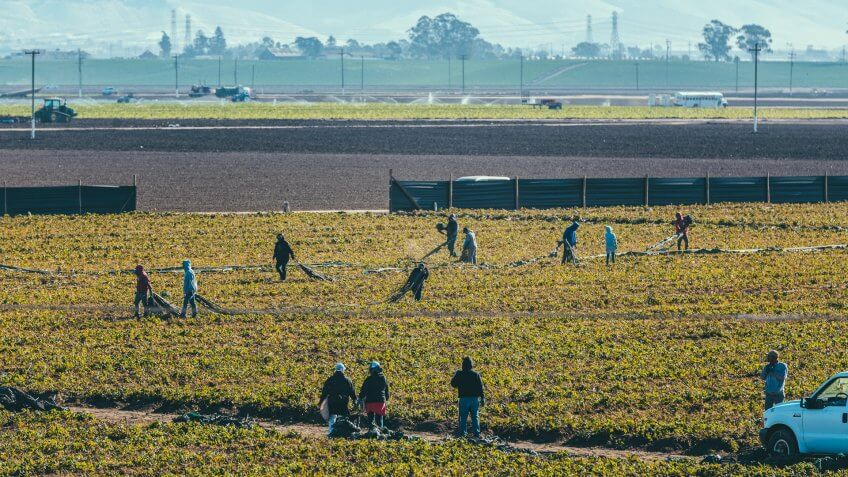 Monterey, California, USA - October 26, 2017: Bussed in migrant workers tending the strawberry fields near Monterey, California.