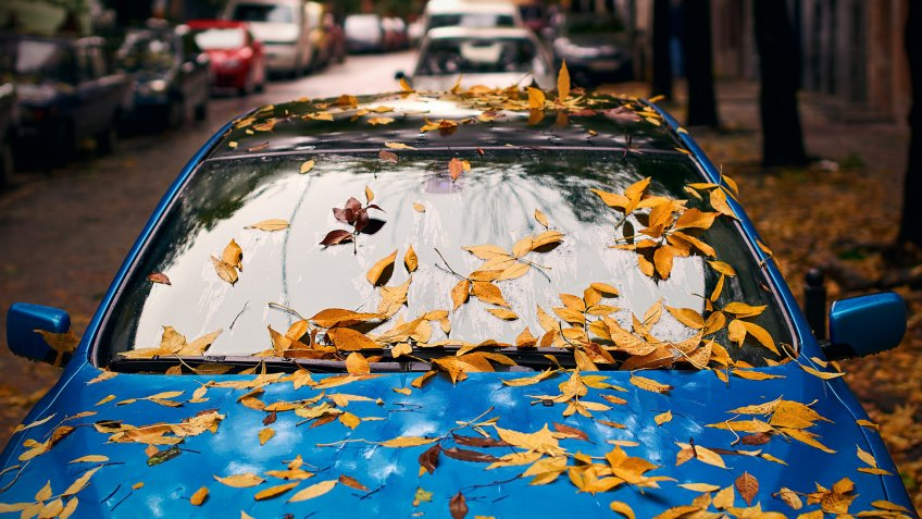 Yellow autumn leaves on a blue car.