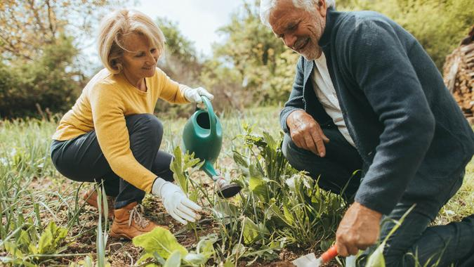 Photo of a senior couple spending their retirement days, gardening in their vegetable garden on a beautiful sunny day.