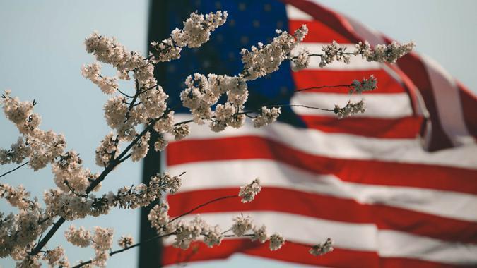cherry blossoms, flowers, american flag, flag