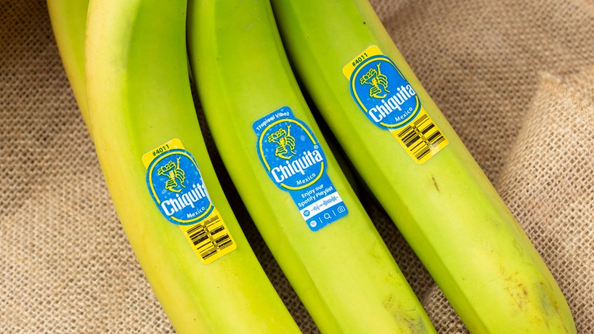 Los Angeles, California/United States - 05/05/2020: A view of a green unripened banana bunch with Chiquita brand stickers.