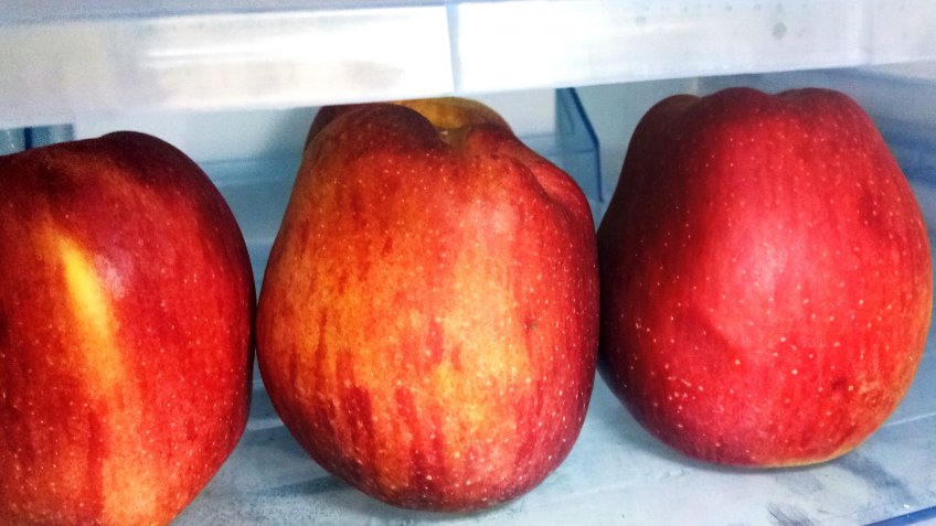 Apples in Food Container in the Refrigerator.