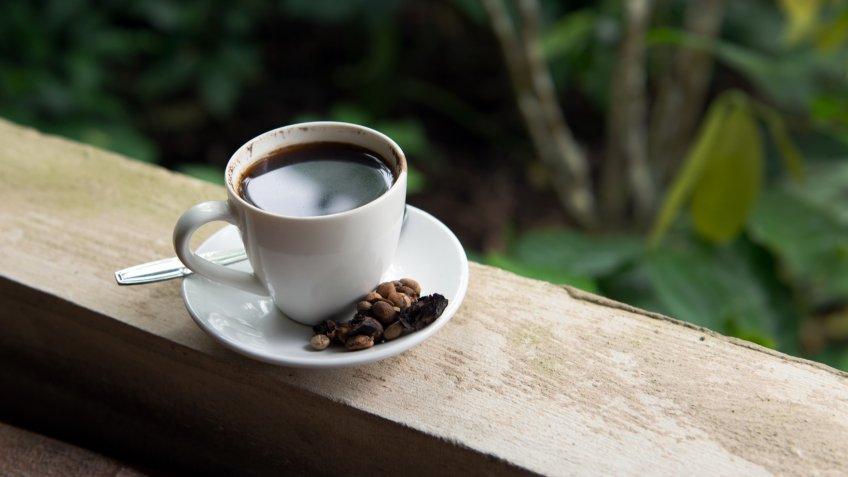 Cup of Kopi Luwak, world's most expensive coffee from Bali Indonesia
