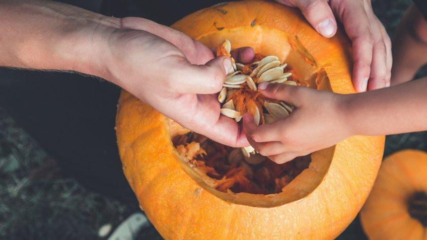 A close up of daughter and father hand who pulls seeds and fibrous material from a pumpkin before carving for Halloween. Prepares jack-o-lantern. Decoration for party. Little helper. Top view.