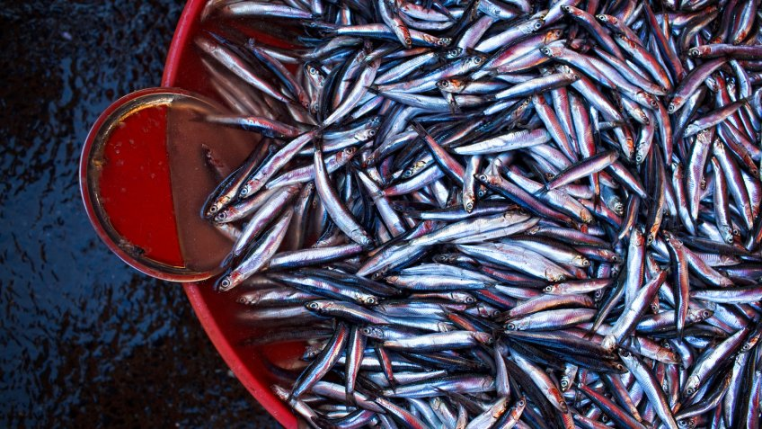 fresh anchovies (hamsi) at the fish market of istanbul (galatasaray ).
