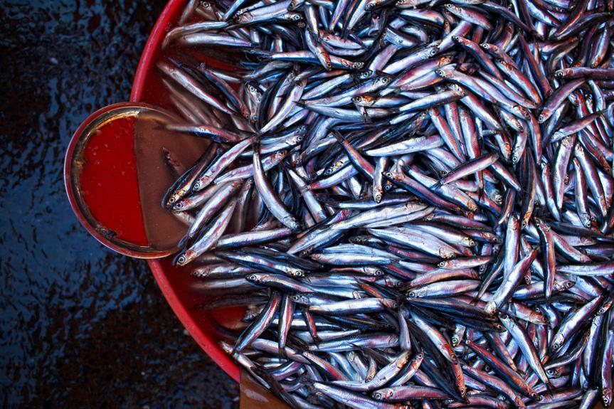 fresh anchovies (hamsi) at the fish market of istanbul (galatasaray ).