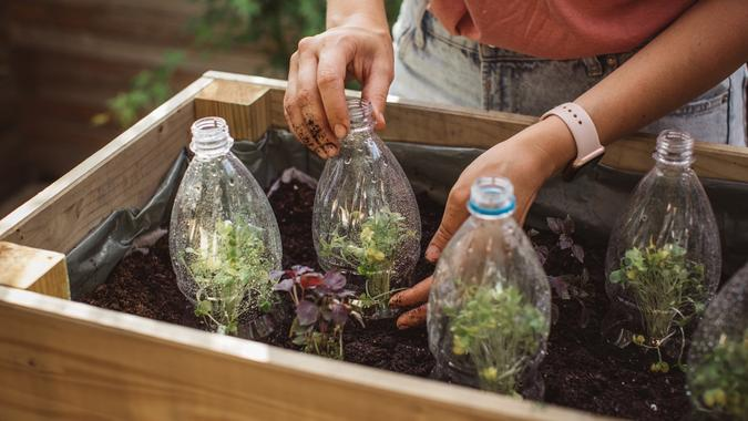 Use old plastic bottles in garden stock photo