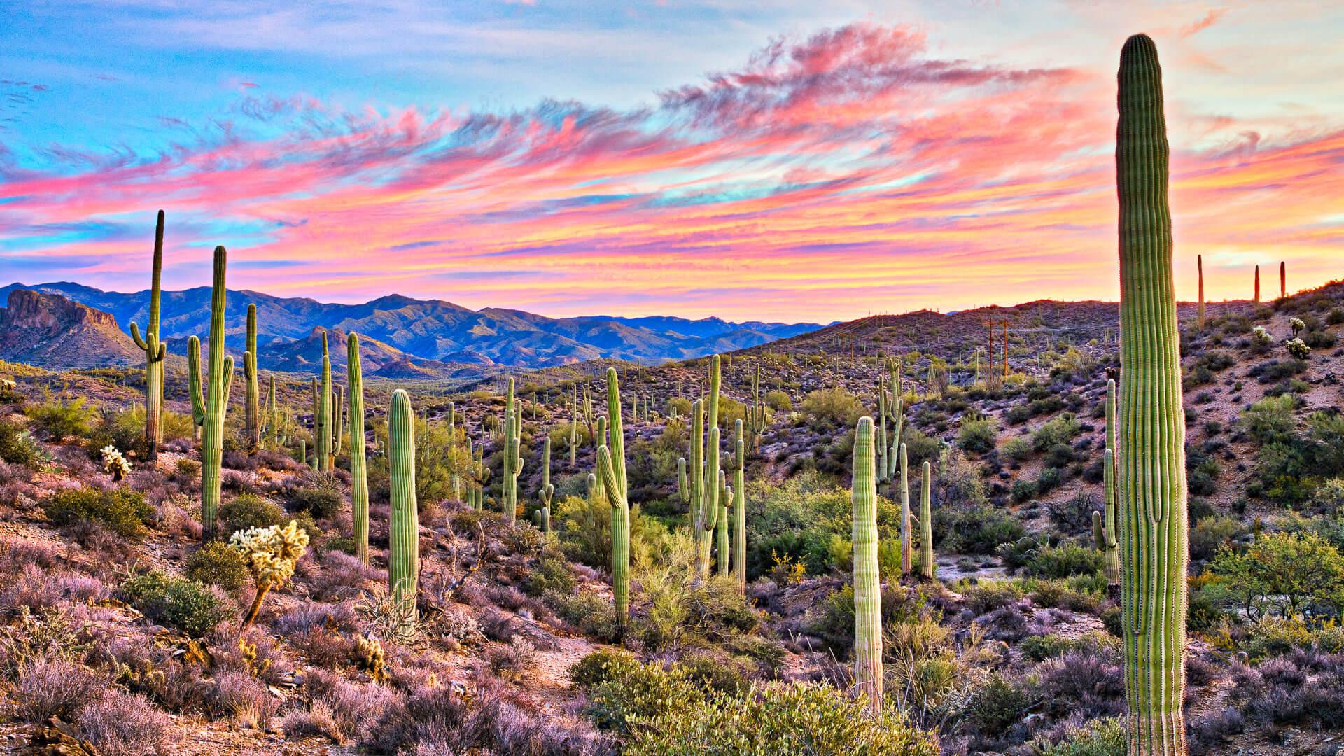 Sunrise in Sonoran Desert near Phoenix, Arizona.