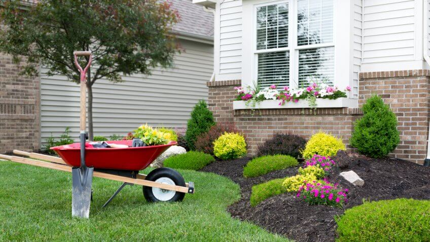 Wheelbarrow standing on a neat manicured green lawn alongside a flowerbed while planting a celosia flower garden around a house with fresh spring plants.