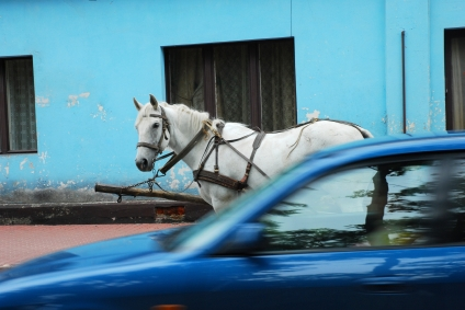 September: Best Time to Buy a New Ride–Cars, Bikes, Even Horses?