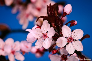 First Day of Spring 2014 Freebies and Discounts